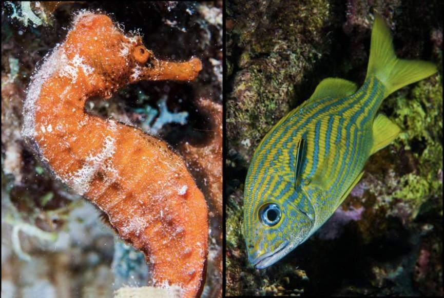 Underwater colour by Derek Gould