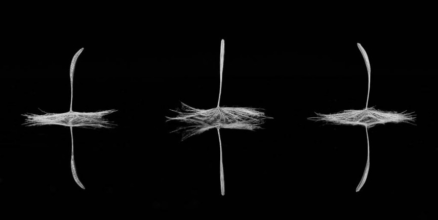 Dandelion Dancers by Christine Lowe - Highly Commended