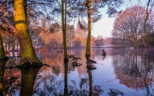Early Winter Morning Reflections by Ed Foy