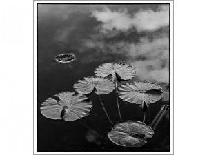 Floating by Alan Shufflebotham