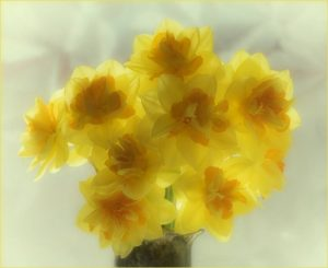 Commended - Spring brightness by Barbara Green