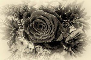 Wet Rose by Derek Gould