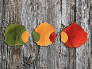 Commended - Autumn Leaves by Paul Hamilton