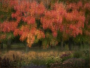 Highly Commended - Impressionist autumn by Barbara Green