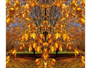 Autumn Colour by Alan Shufflebotham