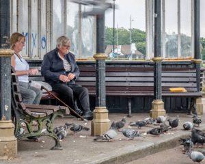 Derek Gould Well Fed Pigeons