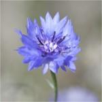 The Digital Image Winner was 'Corn Flower' by Paul Matthews