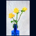 14 Yellow roses in a blue bottle