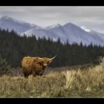 15 A Taste of the Scottish Highlands