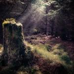 83 Mystic Woods