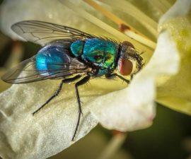 Derek Gould_Big Blue Fly_DC (1)