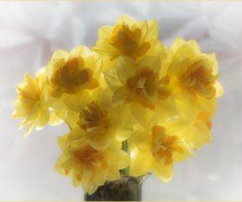 """Spring Brightness"" by Barbara Green"