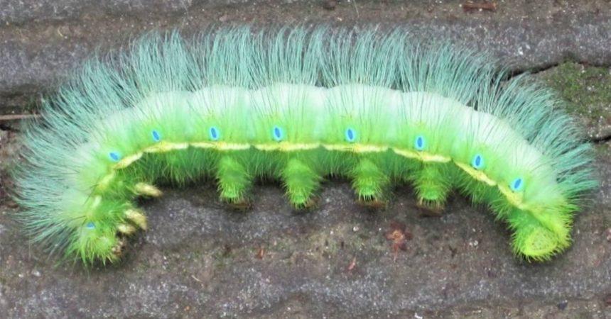 Spikey Caterpillar - Ann Roberts
