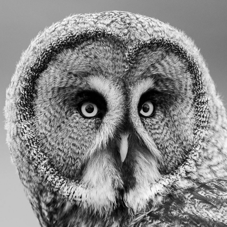 Owl Stare by Christine Lowe - Highly Commended