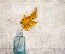Autumn Leaf by Stan Farrow