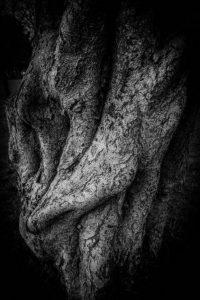 Gnarled Silver Birch by Derek Gould