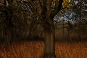 Autumn Colours by Sarah Bevan