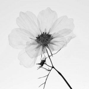 Purity by Sarah Bevan
