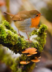 The Robin and The Fungi by Amy Ashley-Mather