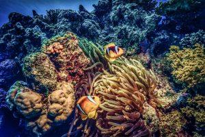 Red Sea Coral Reef, Kodachrome, 2002 by Derek Gould