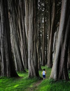 Commended - Into the Woods by Paul Hamilton