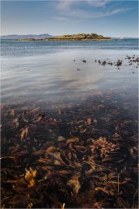 Scottish Kelp by Simon Rahilly LRPS