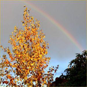 Autumn Shower by Tim Evans